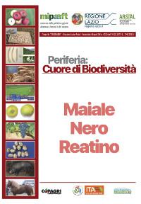 06_MAIALE NERO REATINO_39-44